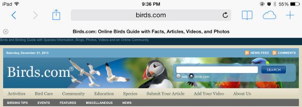 iOS7 Safari Screen